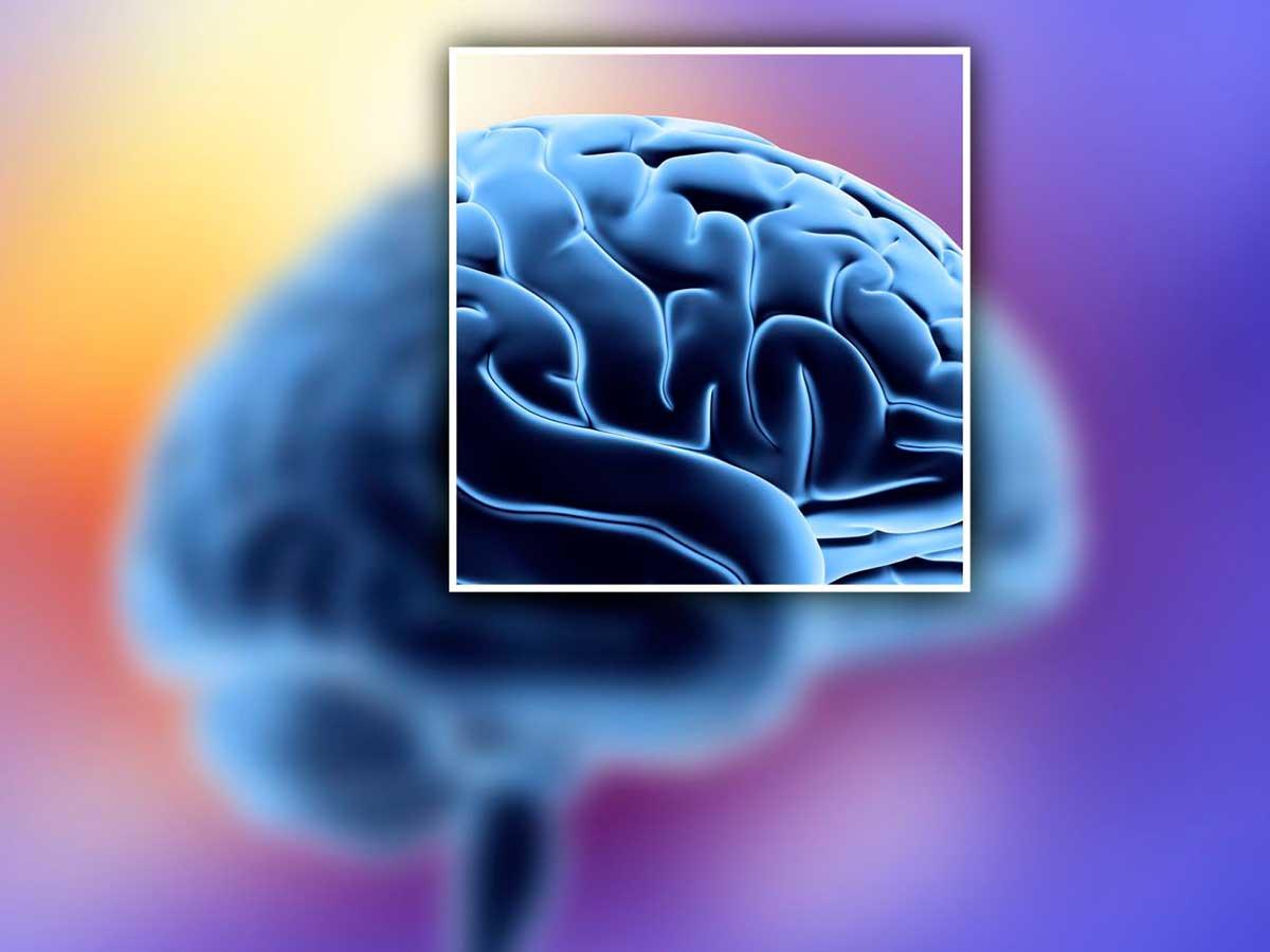 Circunvoluciones Cerebro