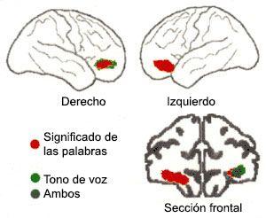 Lateralización cerebral de las emociones