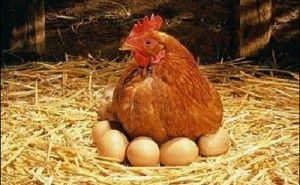 Huevos de gallina y de pata