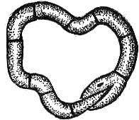 solucion-serpiente-hula
